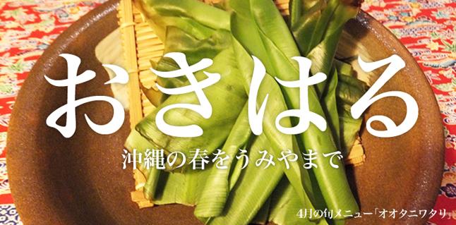 4月おすすめメイン食材-「オオタニワタリ」